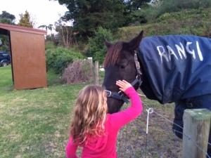 A horse with a name: Rangi. Image copyright Caroline Barron 2015